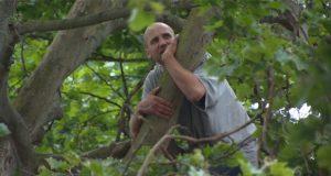 zacchaeus-up-tree