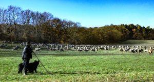 shepherd of the flock